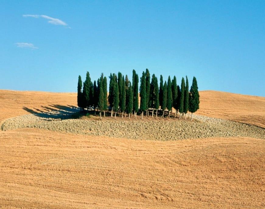 Paesaggio Toscano: Il circolo dei cipressi di San Quirico
